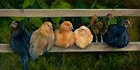 On the Fence-ValerieKoppalaGardier-15X30