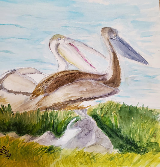 dupuis-Pelicans-12x9watercolor.jpg