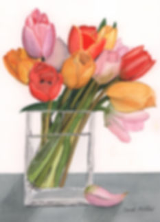 Mills-Tulips.jpg