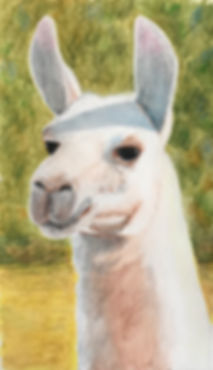 Krisl-Who's There?-10x5.5-Watersoluble c