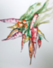 Storms,Ann-Carrots-watercolor12x9.jpg