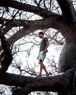 Photographer walking on giant boab tree, Kimberleys, Western Australia
