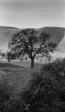 Winter Tree at Black Diamond Mines