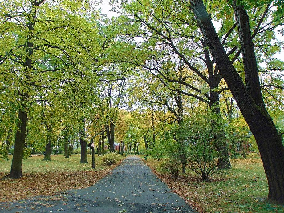 Park Manitiusa - aleja (1).jpg