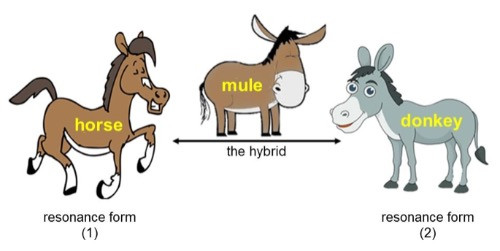 A picture of a horse and a donkey and their offspring - a mule