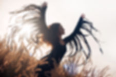 beautiful woman silhouette. wings and fr