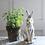 Thumbnail: Ceramic Rabbit