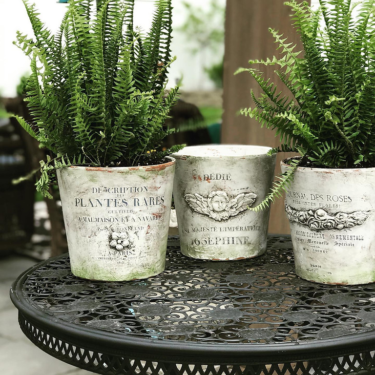 French Chateau Pot with Iron Orchid Designs (June 27)
