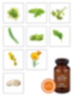 retipalm_KIS_Herbs_lres.jpg