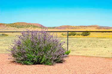 one good looking fence edited.jpg