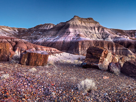 The petrified wood and its story