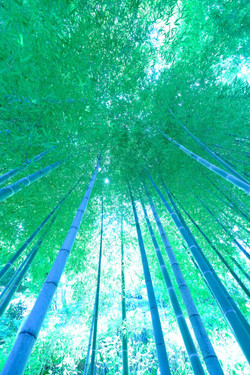 psychedelic bamboo