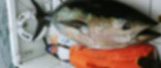 1203171348_edited.jpg