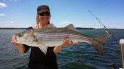 Plymouth Bay Striper