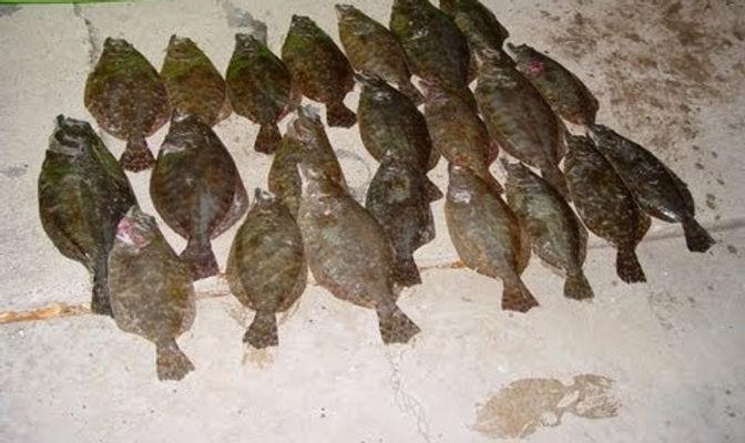 Flounder_edited.jpg