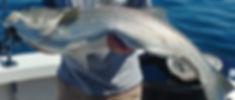 0629181056_HDR.jpg