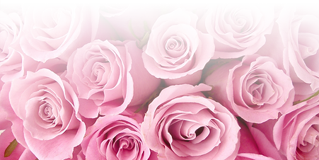 Pink-Rose-104.png