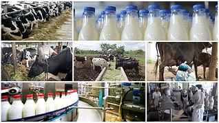 Indian-Dairy-Market.jpg