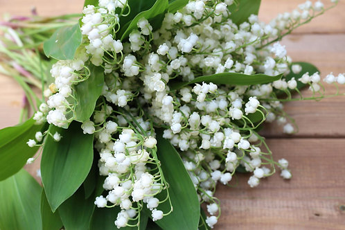 Lily of theValley