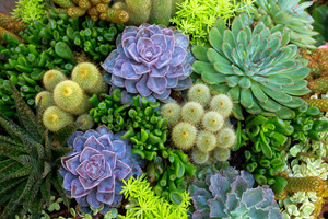Succulent Dish Garden Workshop