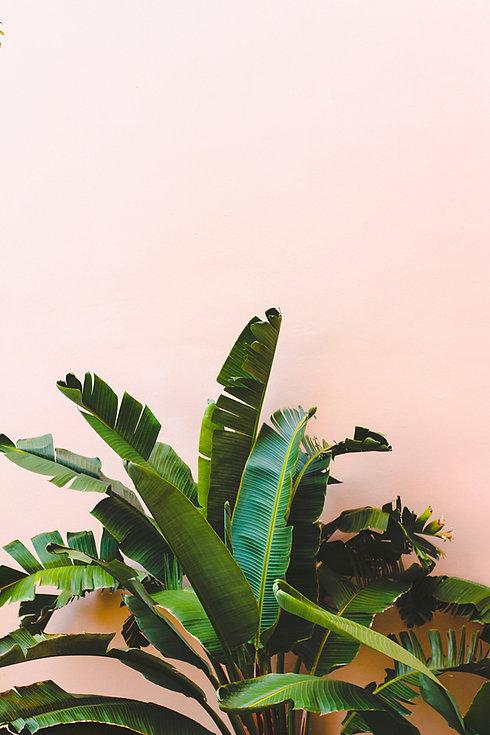 bananaleaf.jpg