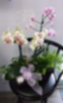 jardin_plantes_orchidées_pastels_edited.