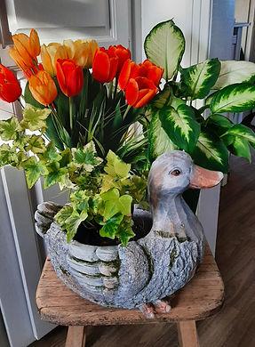 jardinière canard, plantes etc...jpg