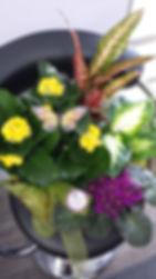 jardin plantes.jpg
