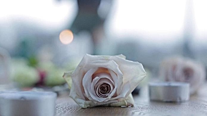 Pink Rose.jpeg