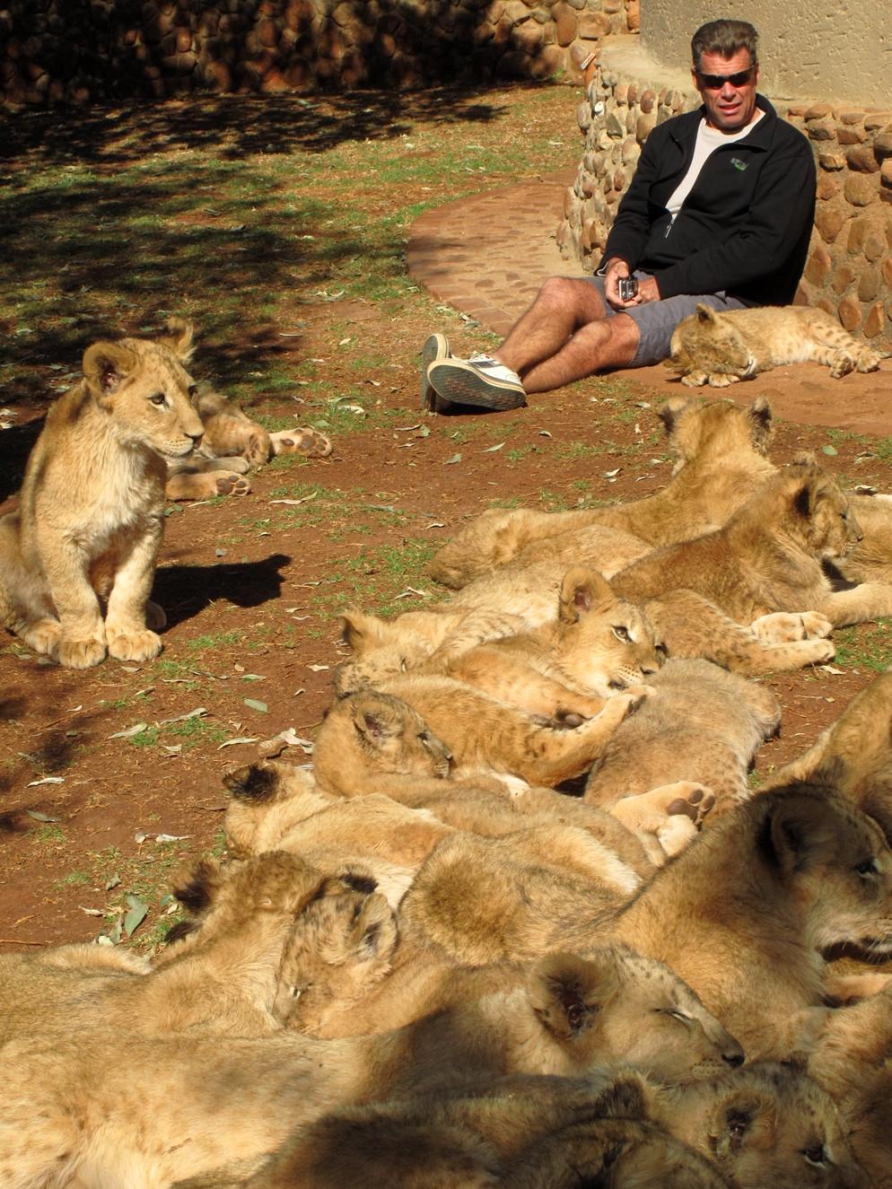 Leijonanpennut on kasvatettu metsästettäviksi. Kuva: Ian Michler