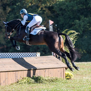 Cohiba at the Young Event Horse Championships