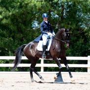 Oz at Virginia Horse Trials