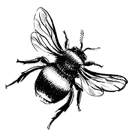 bee-lineart-line-work-14_edited.png