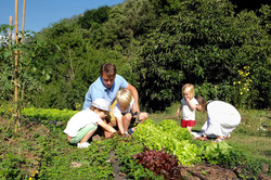 picking-salad-and-other-vegetables