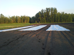 Row Cover before the wind