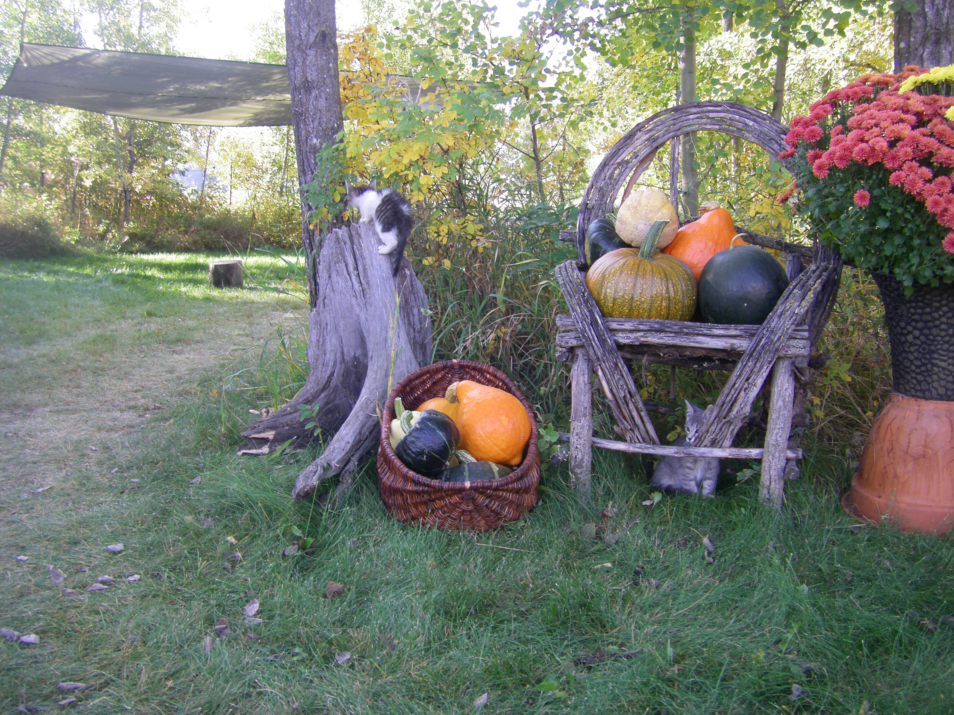 Harvest Day Squash