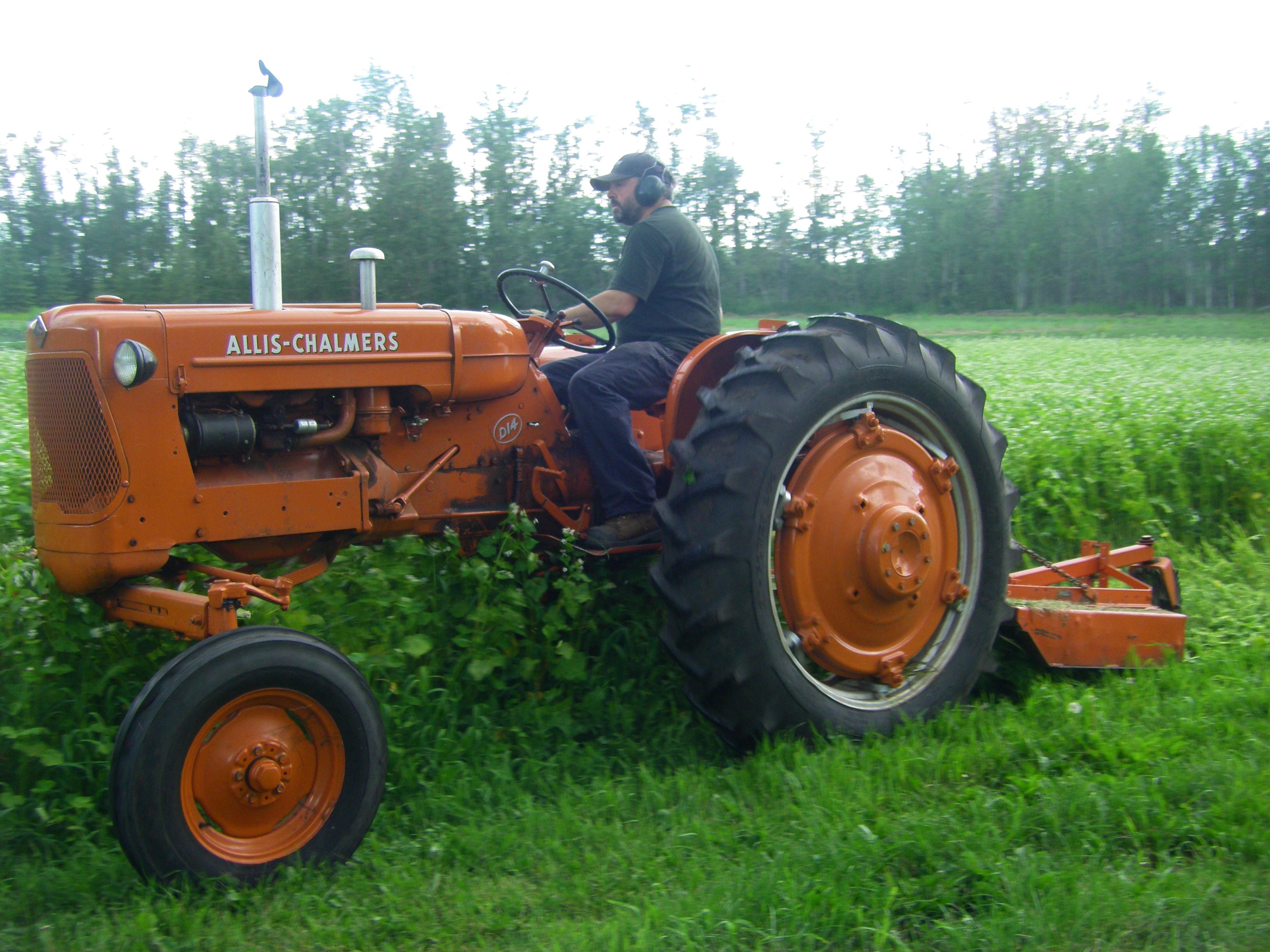 Ron mowing the buckwheat
