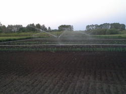 Another irrigation shot