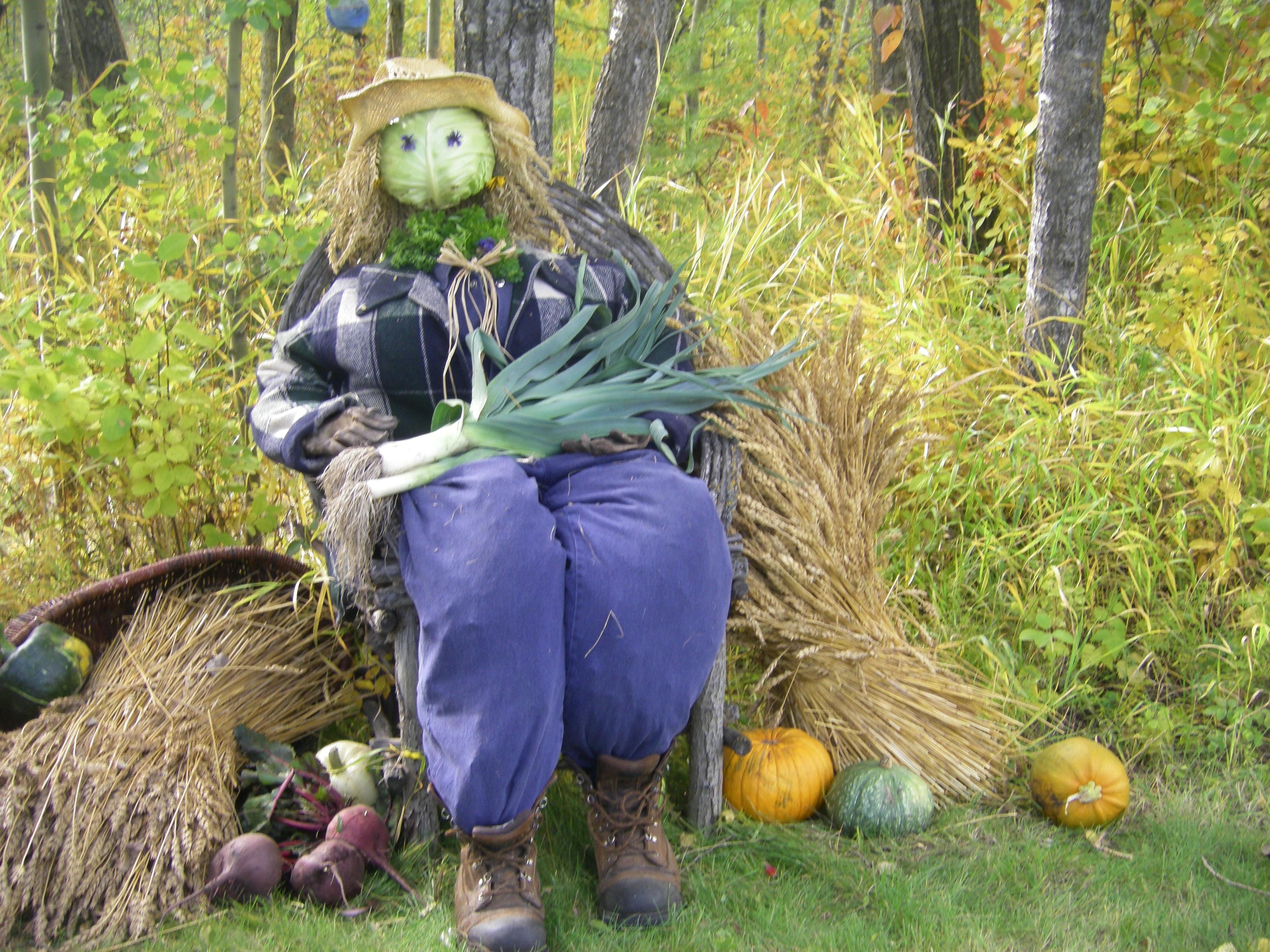 Harvest Friend