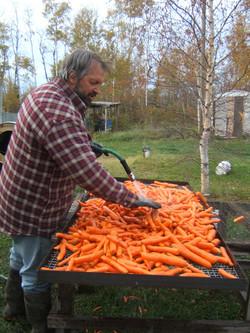 Ron Washing Carrots