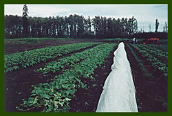 Row Cover in Field