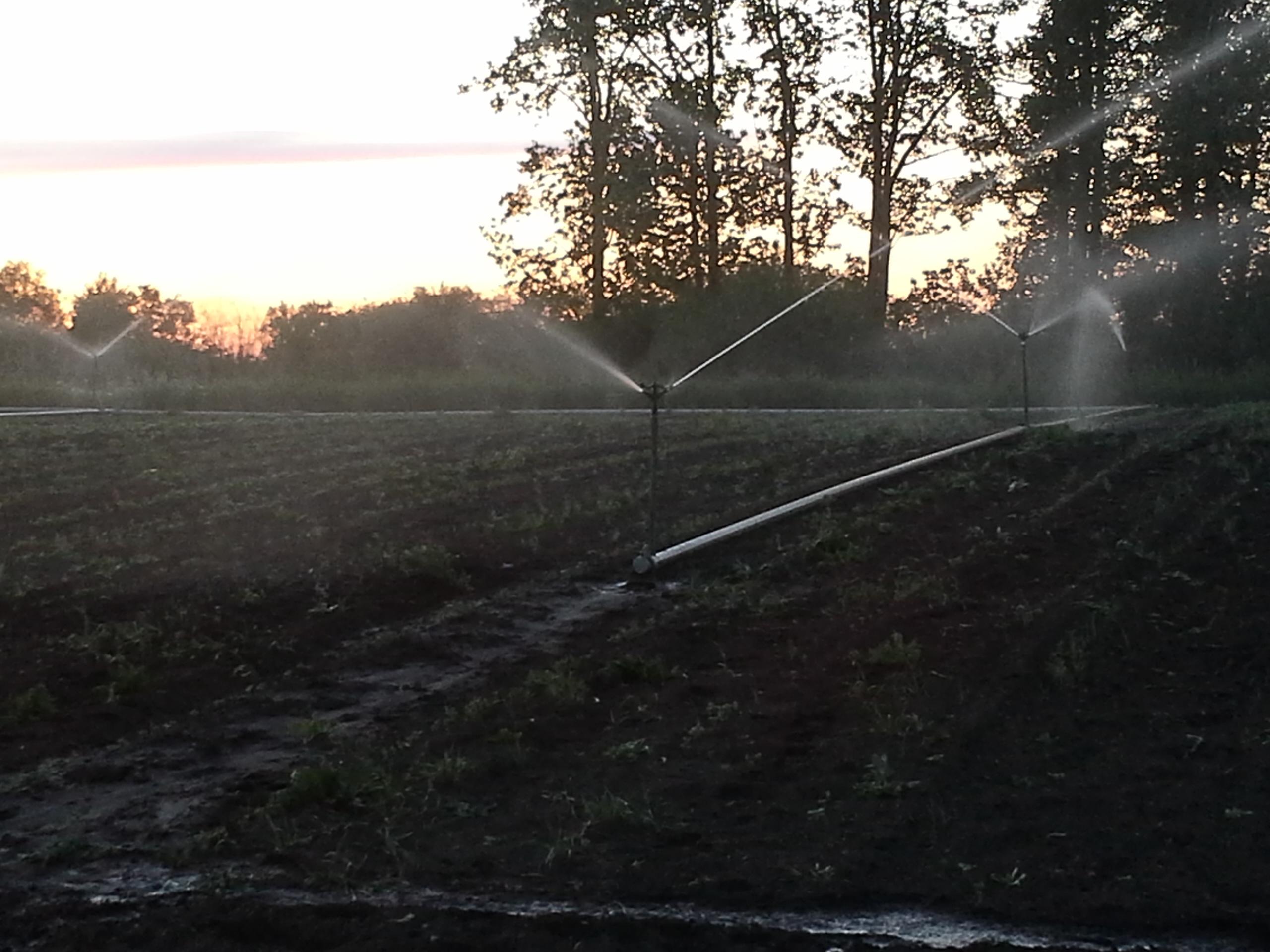 Irrigating at Sunset