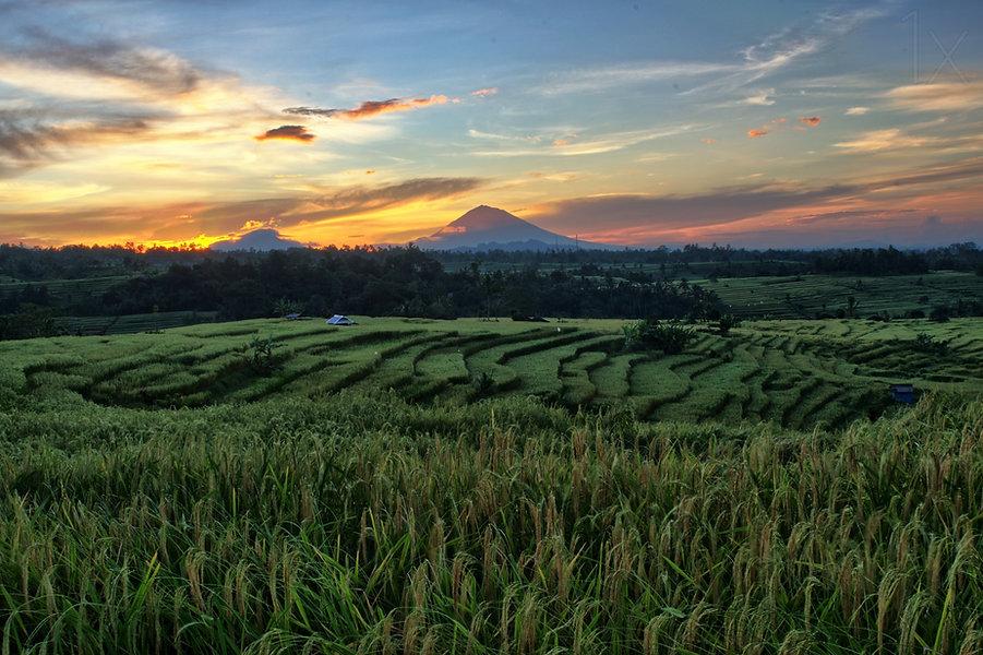 Villa Bali Management_Jatiluwih ricefiel