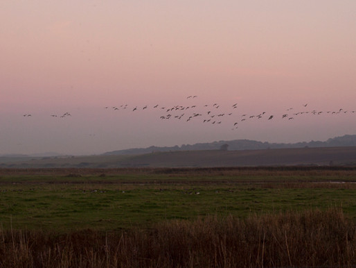 A wild goose chase in Norfolk