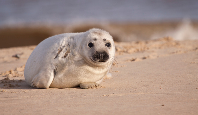 Grey seals weathering the storms in Norfolk