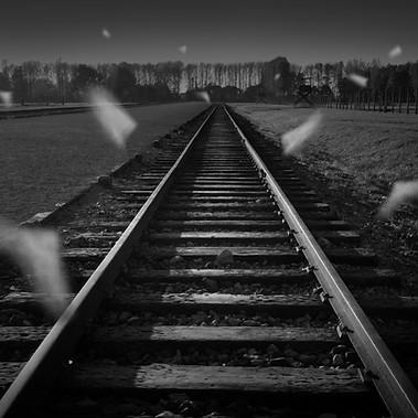 Untitled / Auschwitz - Birkenau  2011