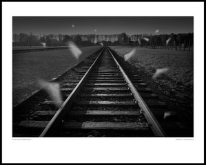 Untitled / Auschwitz Birkenau 2011
