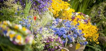 Summer flowers for crowns