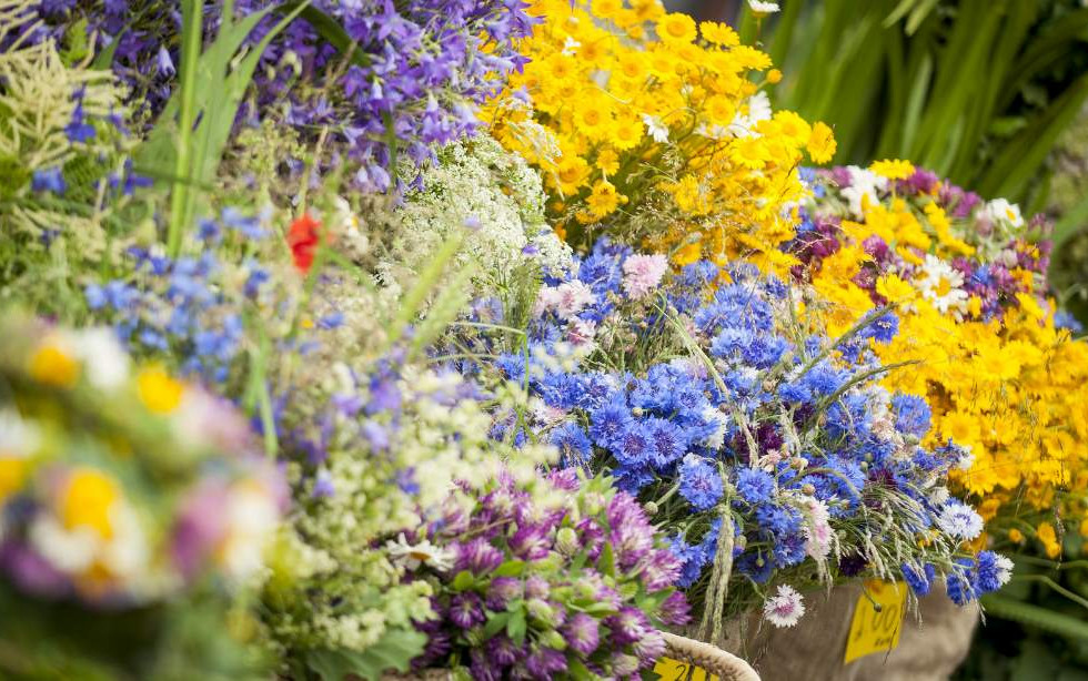 Ligo flowers