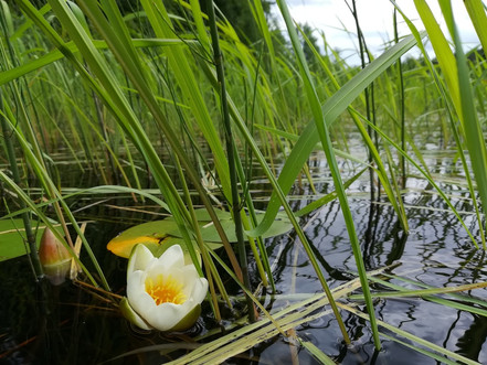 treasures in the lake